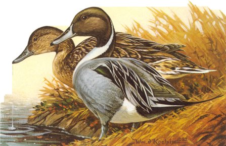 1982 WI Duck Stamp Print
