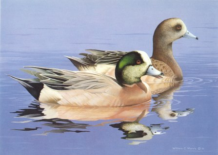 1984 Fed Duck Stamp Print