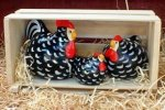 Wyandotte<br> New Zealand Happy Hens